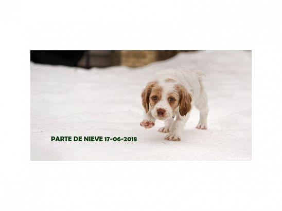 PARTE DE NIEVE 17-06-2018