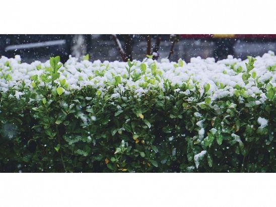 parte de nieve